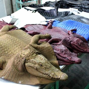 """Mua đồ da cá sấu giá rẻ – """"tiền mất tật mang"""""""