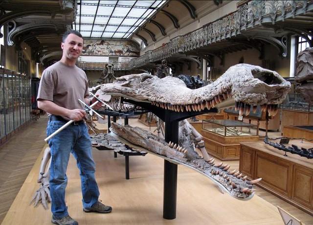 Phân biệt crocodile và alligator trong tiếng anh con nào mới là cá sấu - 3