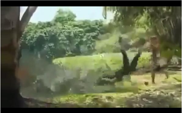 Cô gái bị cá sấu khổng lồ tấn công khi đang