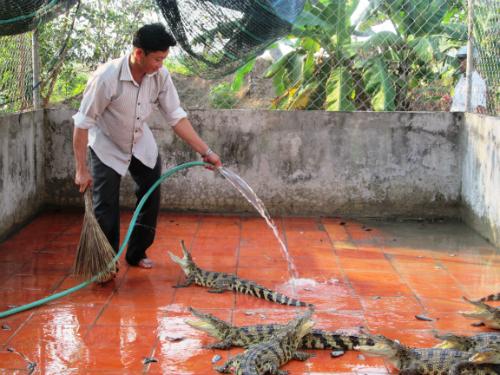 Cá sấu con rớt giá thảm bại