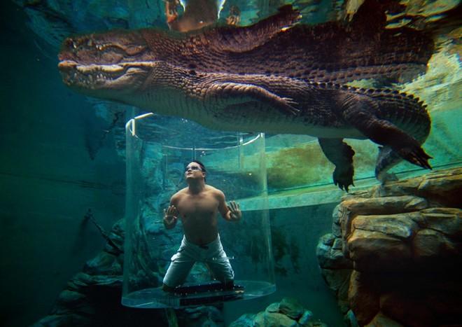 Bơi cung ca sâu không lô ơ công viên tai australia - 2