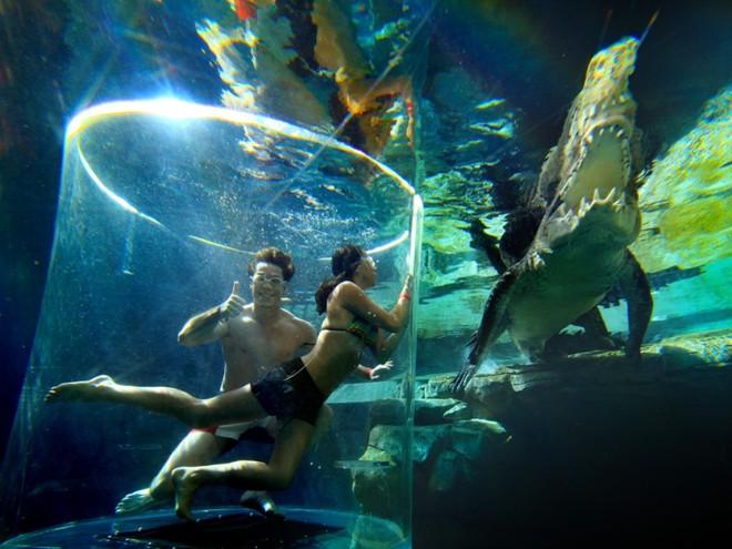 Bơi cung ca sâu không lô ơ công viên tai australia - 3