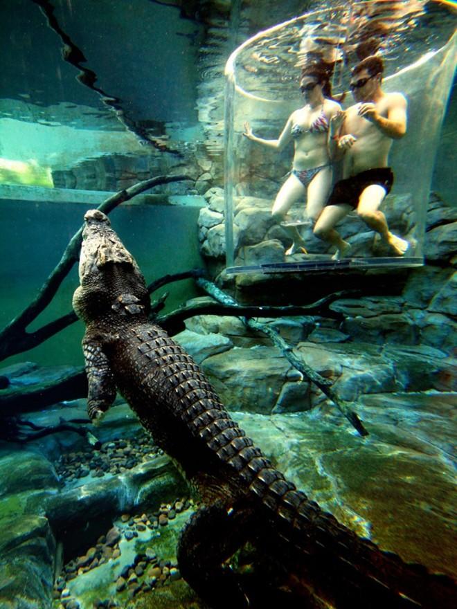 Bơi cung ca sâu không lô ơ công viên tai australia - 4