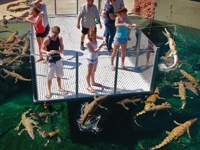Bơi cung ca sâu không lô ơ công viên tai australia - 5