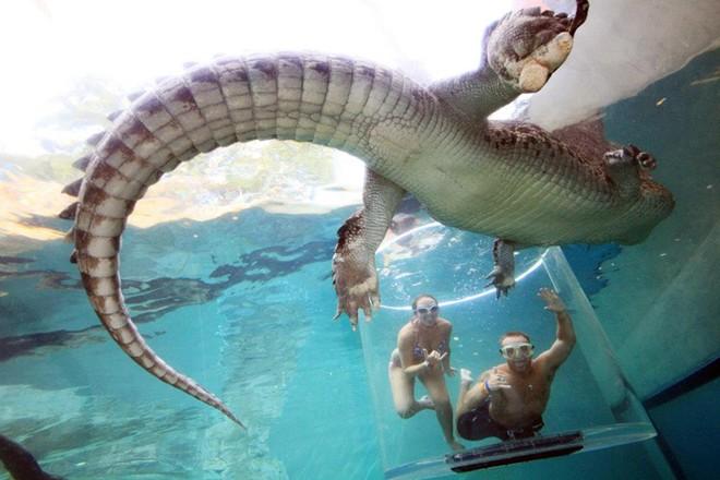 Bơi cung ca sâu không lô ơ công viên tai australia - 6